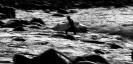 Sliten surfer - Malvin Dyp